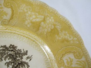 Antique 1830 ' s RARE Staffordshire Enoch Transferware Brown &Yellow Belzoni yqz 7