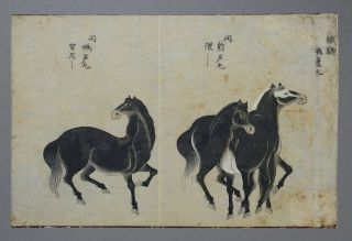 Fine Antique Chinese 19th Century Scroll Painting - 3 Horses