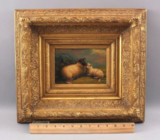 Antique 19thc Scottish Blackface Sheep Landscape Oil Painting & Gold Gilt Frame
