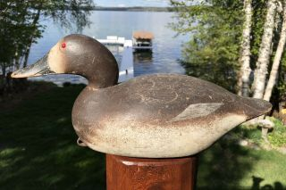 Vintage Mason Premier Grade Hen Canvasback Duck Decoy Paint Hollow Wow