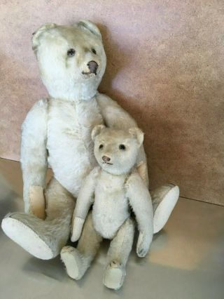 "Two Antique Steiff Bears - White Mohair,  Glass Eyes,  Growler,  "" Ff "" Button"