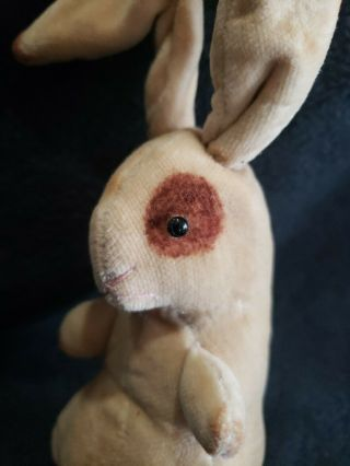Antique Early 1900 ' s Steiff Velvet Bunny Rabbit with Unusual Blank Button 3