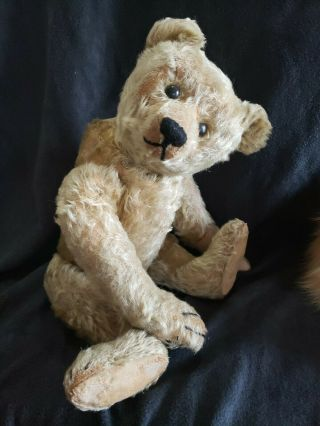 "1916 Steiff 16 "" Teddy Bear With Ff Button"