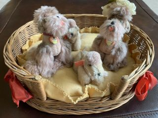 1950's Rare Vintage Steiff Dogs In Basket
