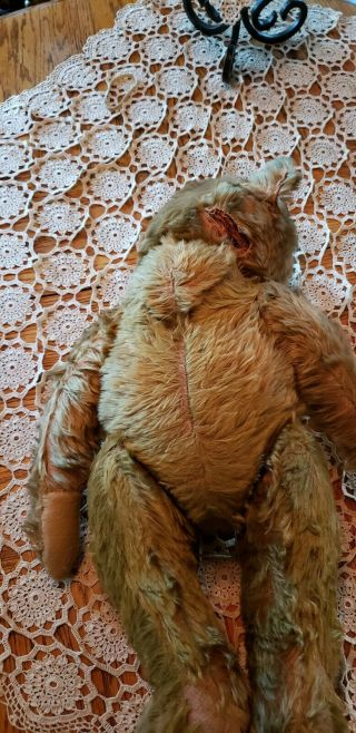 Antique steiff grizzly bear,  early 1900 ' s,  loved hard,  handmade overalls 12