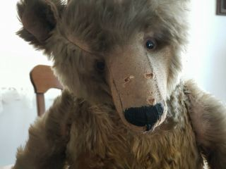 Antique steiff grizzly bear,  early 1900 ' s,  loved hard,  handmade overalls 6
