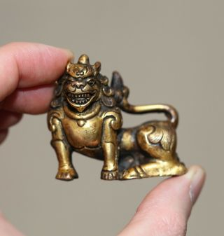 Antique Chinese Tibetan Gilt Bronze Buddha Lion,  18th Century,  Qing Dynasty Rare