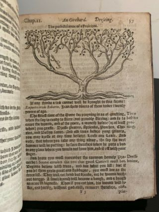 1626: One Of The Rarest Early Of English Gardening - Woodcuts Rare