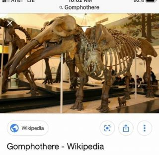 GOMPHOTHERE LOWER JAW SECTION RARE MULTIPLE TEETH FOSSIL MASTODON MAMMOTH 4