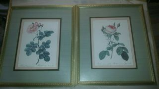Two Vintage Triple Framed Prints Of A Rose Artist Unknown