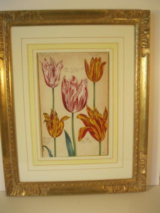 Pair,  Framed 17th C.  Hand - Colored Engravings Of Tulips.  $2,  000.